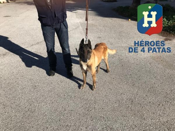 Kaos perro en adopción