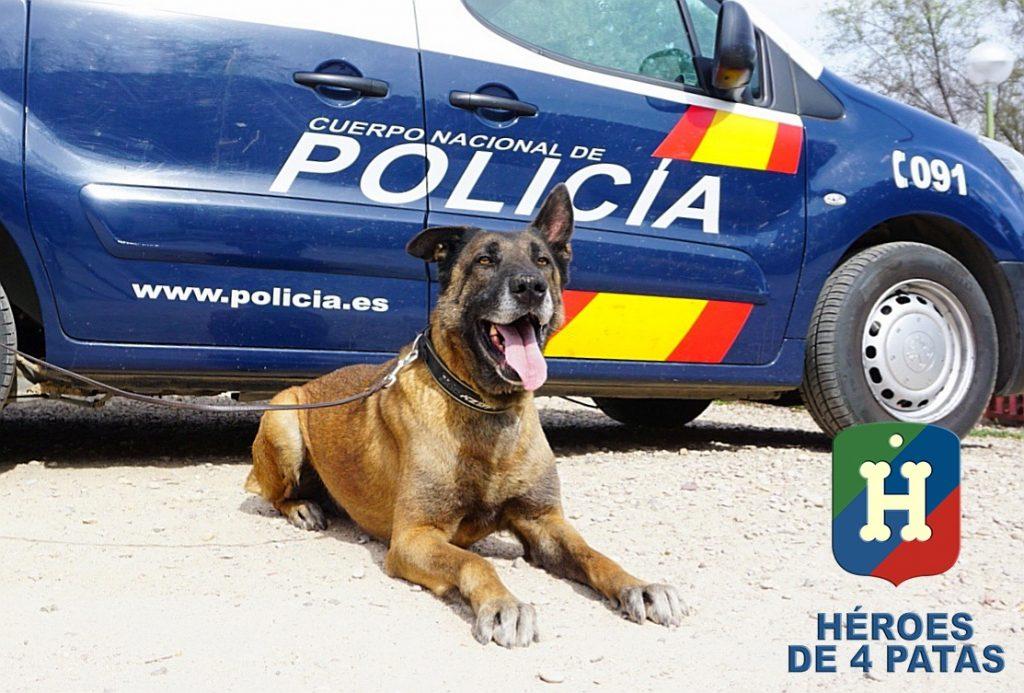 Krum perro en adopción