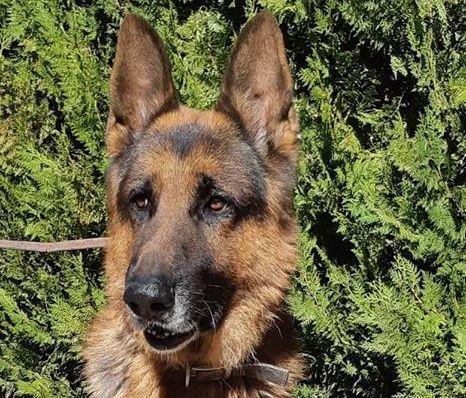 Tango perro en adopción
