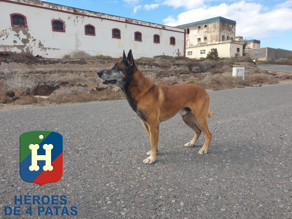 perro guía de las fuerzas armadas