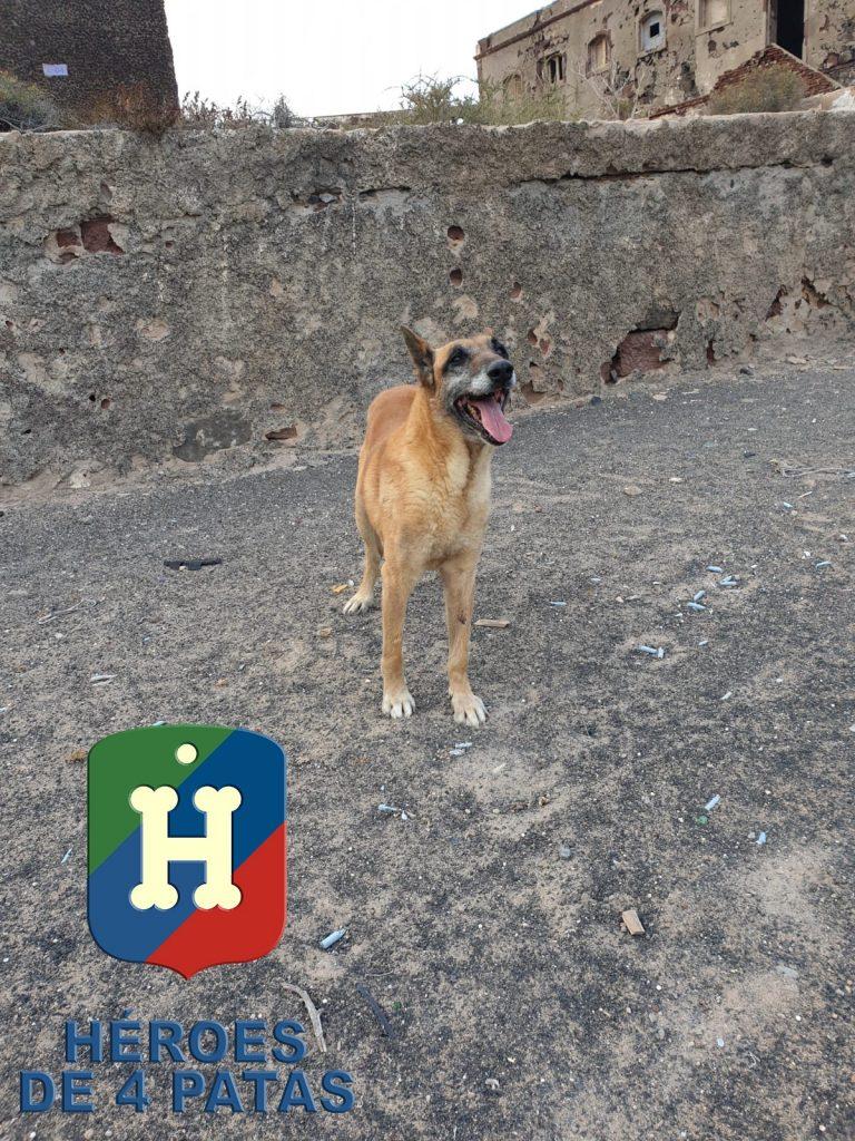 perro fuerzas armadas héroe de 4 patas